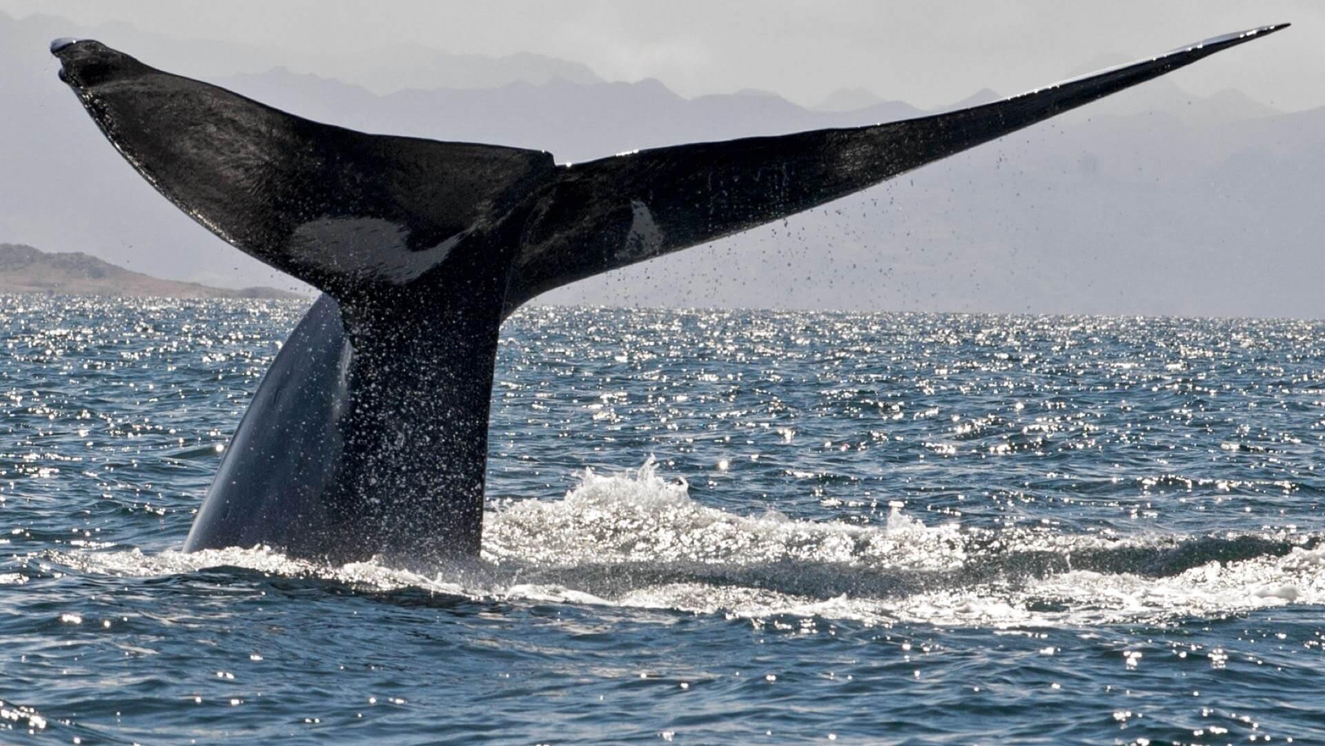 Rendezvous mit einem Blauwal